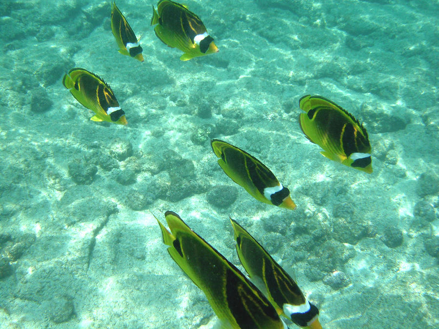 Fish Photograph - Incoming by Karen Nicholson