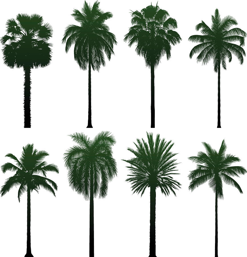 Incredibly Detailed Palm Trees Digital Art by Leontura