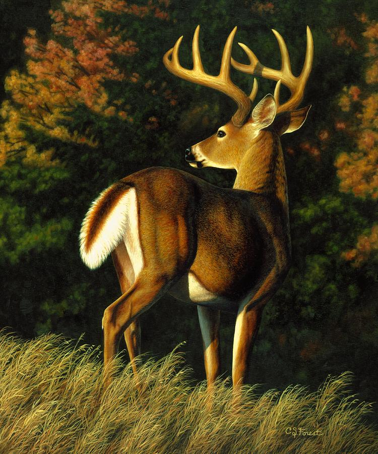Deer Painting - Whitetail Buck - Indecision by Crista Forest