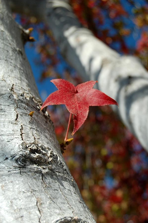 Leaf Photograph - Independent Growth by Jean Booth