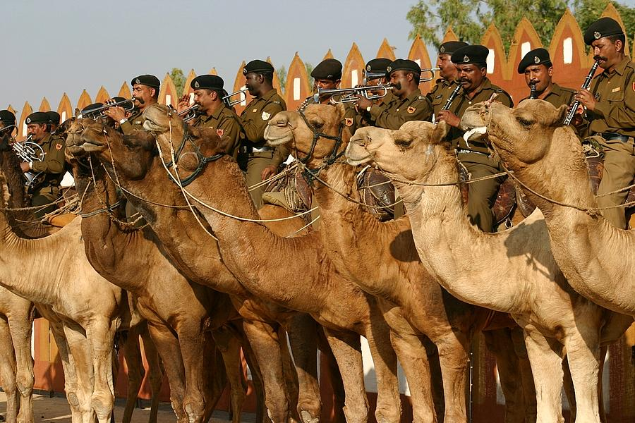 Border Security Force Photograph - India Camel Band by Henry Kowalski
