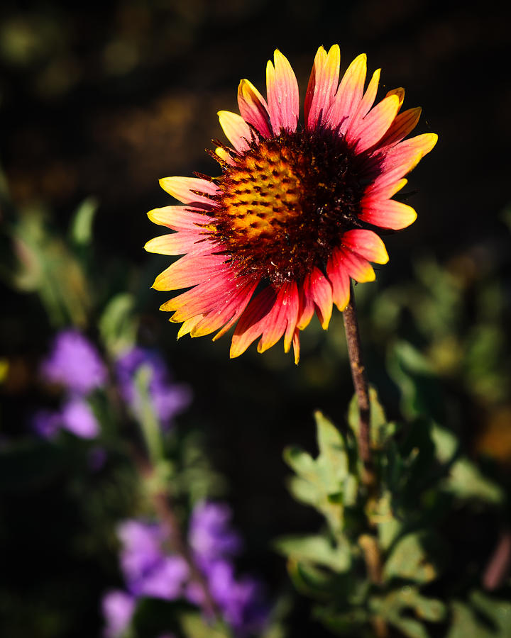 Brown County Photograph - Indian Blanket by Thomas Pettengill