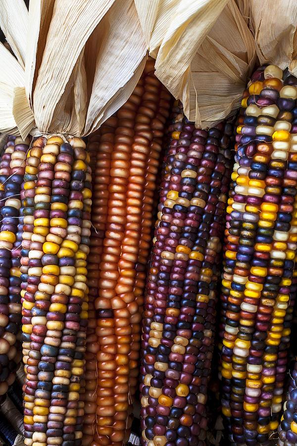 Indian Corn Photograph - Indian Corn Close Up by Garry Gay