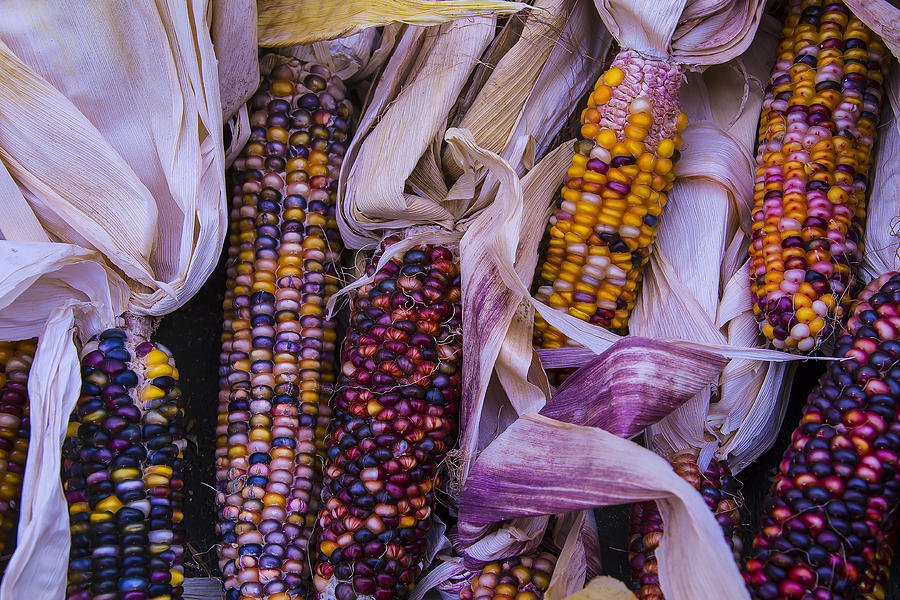 Colorful Photograph - Indian Corn Harvest by Garry Gay