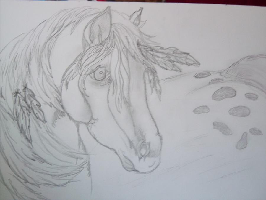 Drawing Photograph - Indian Pony by Rosalie Klidies
