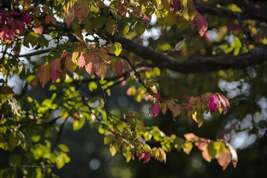 Fall Photograph - Indian Summer by Karen Casey-Smith