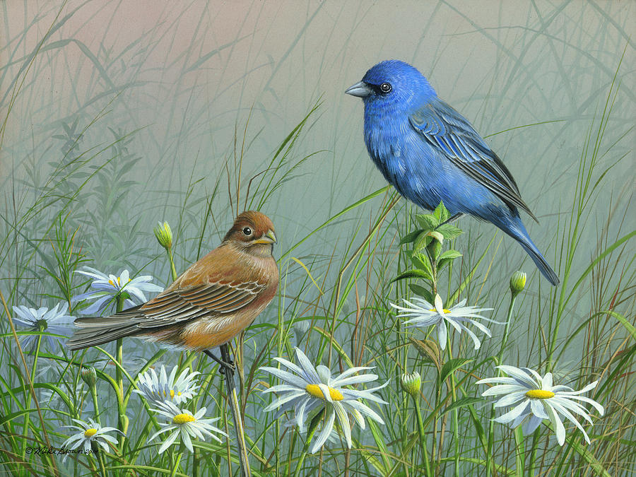 Blue Birds Painting - Indigo Bunting by Mike Brown