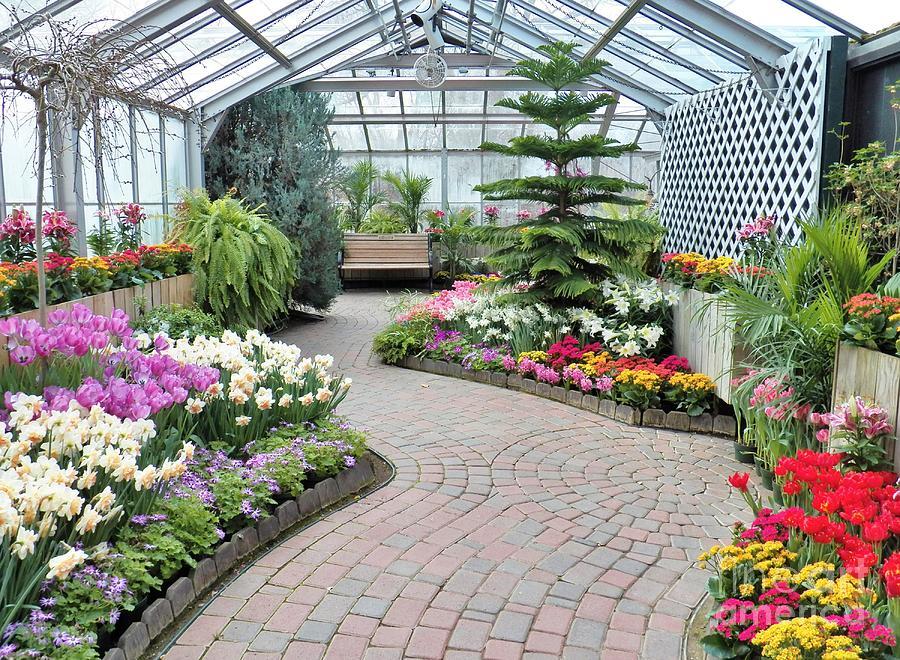 Garden Photograph - Indoor Garden Delight by Judy Via-Wolff