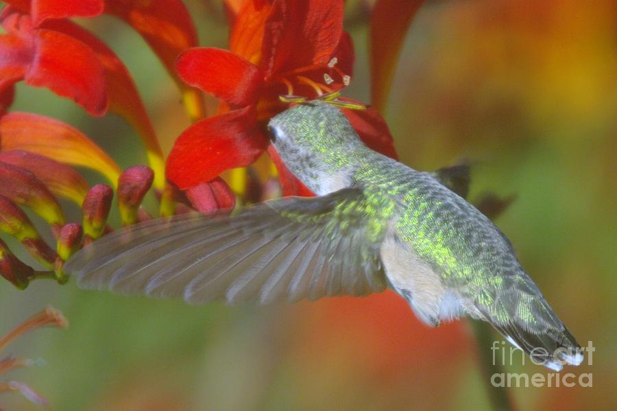 Wings Photograph - Indulgence  by Jeff Swan