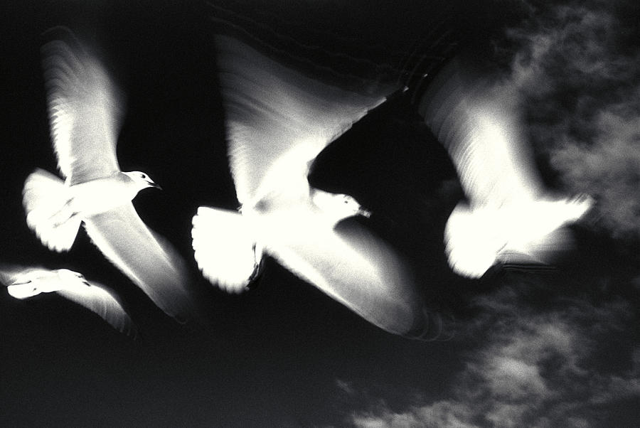 Black Photograph - Infrared Gulls by Jerry McElroy