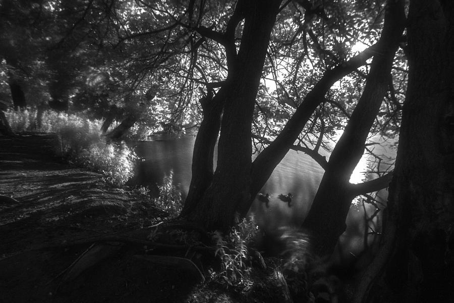 Infrared Morning Pond Scene Photograph