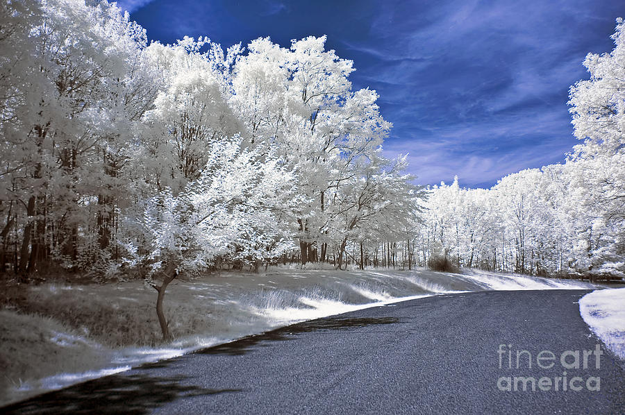 Landscape Photograph - Infrared Road by Anthony Sacco