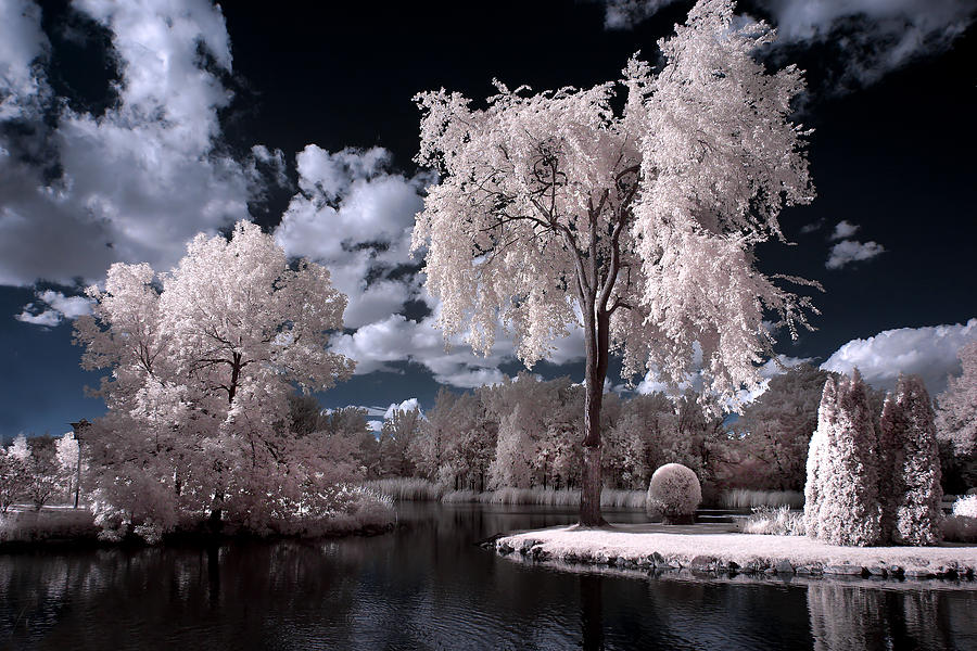 Infrared Photograph - Infrared Scenery by Rachel Bilodeau