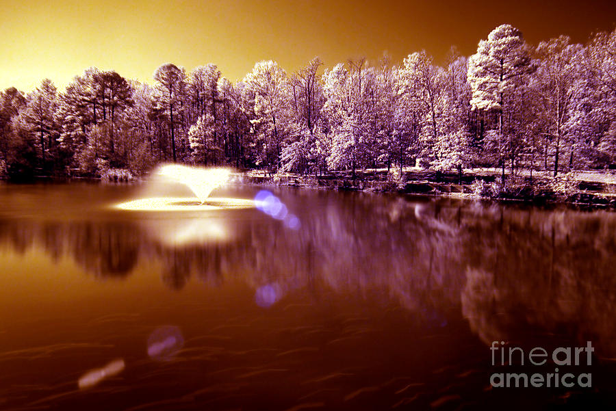 Infrared Photograph - Infrared Study #242 by Floyd Menezes