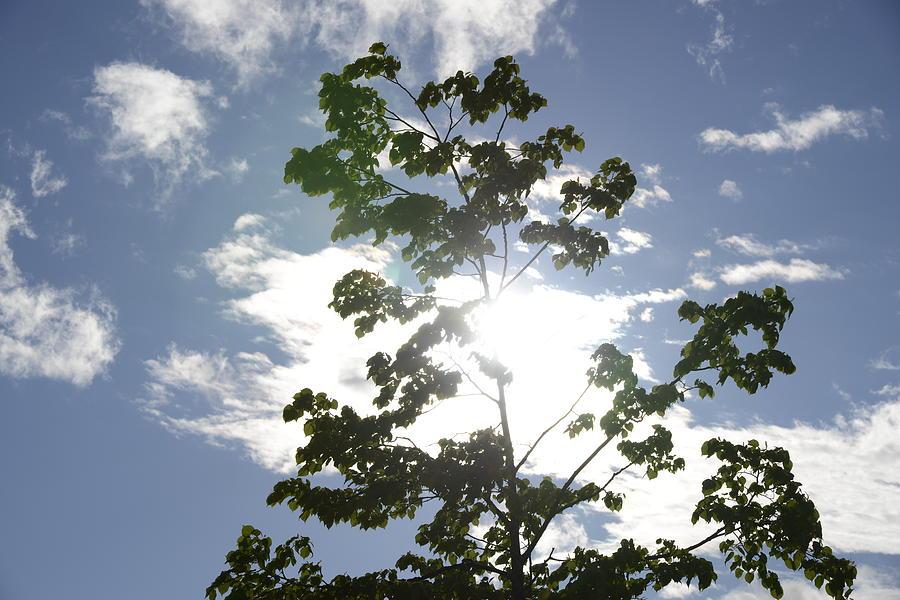 Fine Photograph - Inner Energy In Full Blossom 3 by Teo SITCHET-KANDA