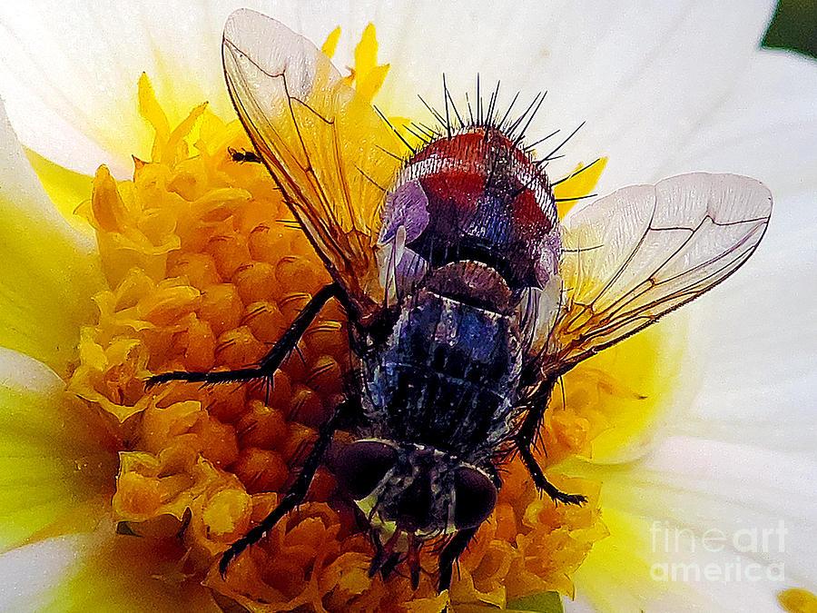 2013 Photograph - Insect On Dahlia by Elvira Ladocki