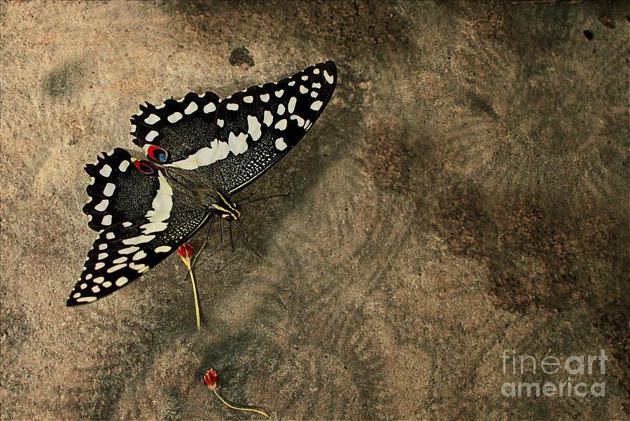 Floyd Menezes Photograph - Insect Study Number 30 by Floyd Menezes