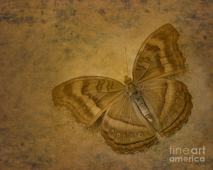 Floyd Menezes Photograph - Insect Study Number 94 by Floyd Menezes