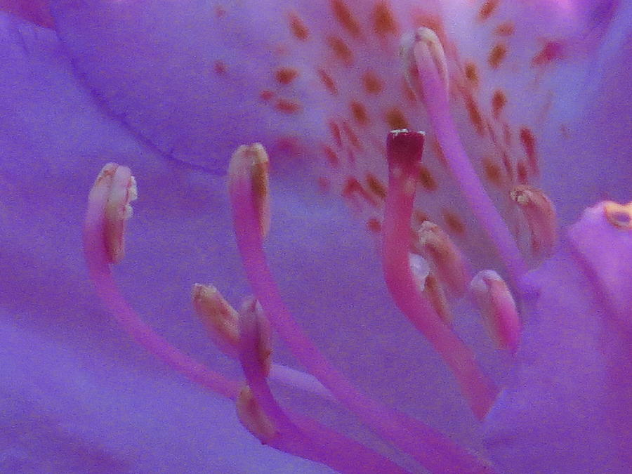Inside A Rhodoendron Photograph by Alex  Call