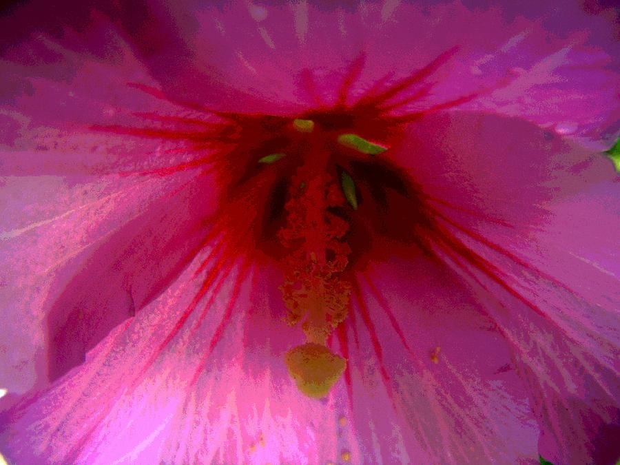 Rose Of Sharon Photograph - Inside A Rose Of Sharon by Mark Malitz