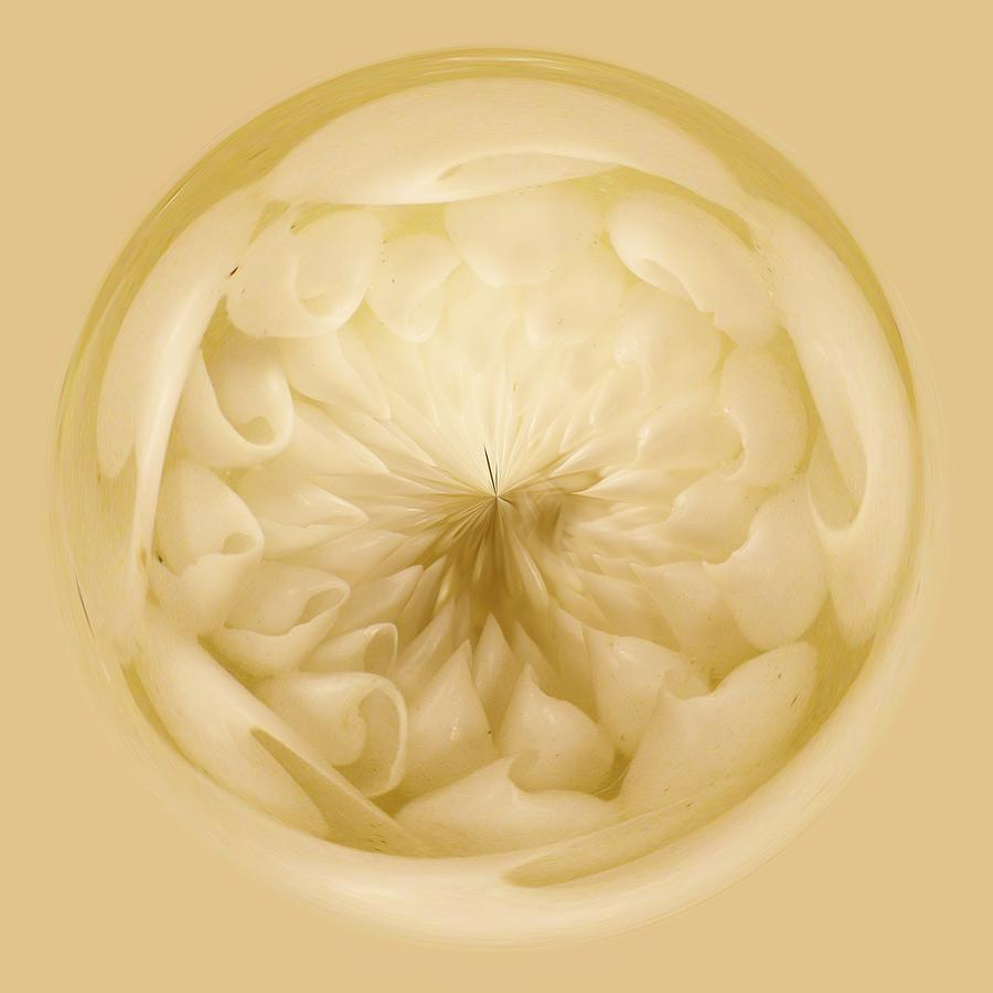Shells Photograph - Inside A Sea Shell Orb by Paulette Thomas