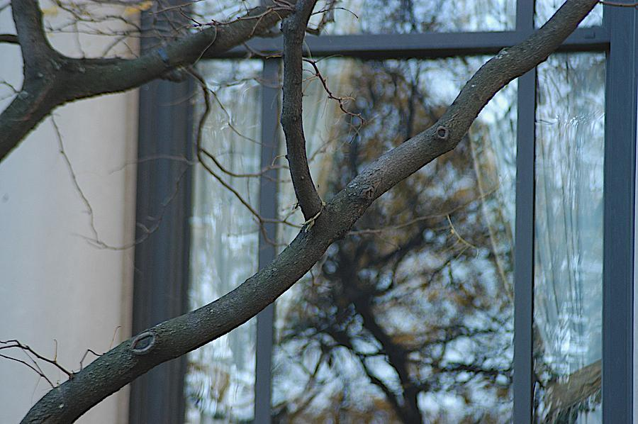 Branches Photograph - Inside by Joseph Yarbrough