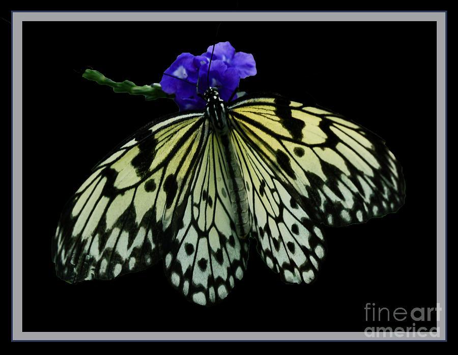 Butterflies Photograph - Inspired By Butterflies  by Inspired Nature Photography Fine Art Photography
