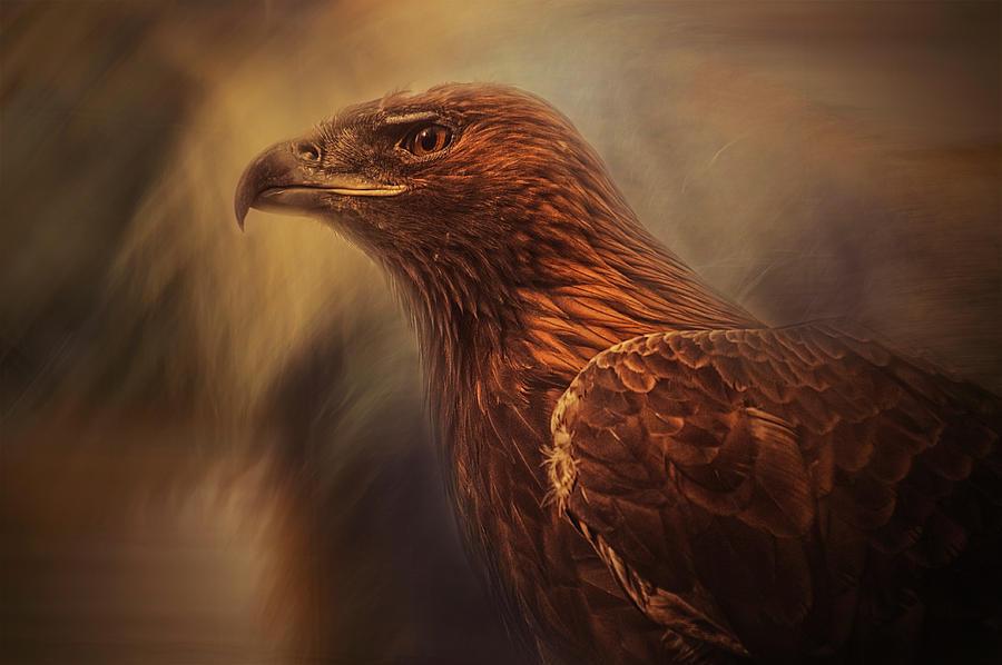 Bird Photograph - Instincts Cage by Desislava Ignatova
