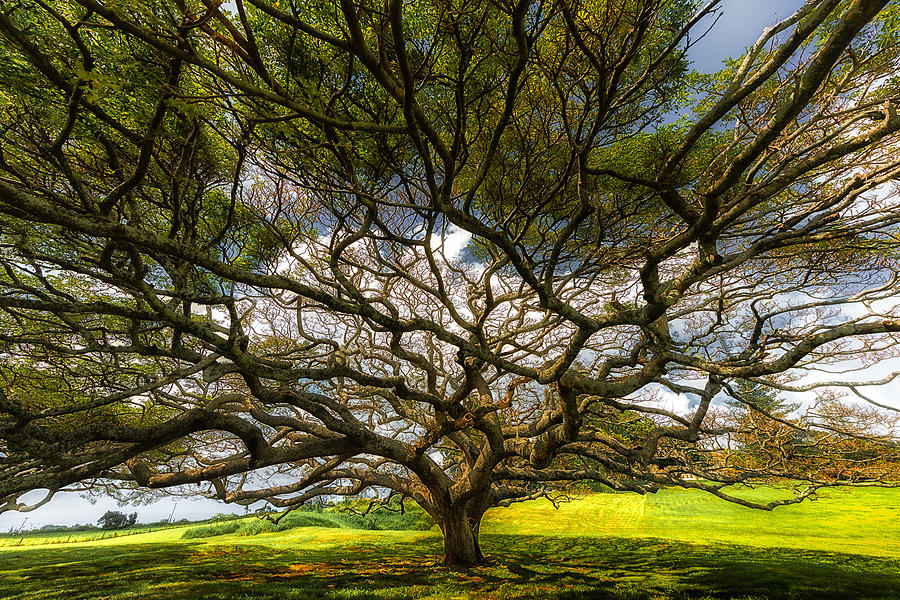 Maui Photograph - Intertwined by Chuck Jason