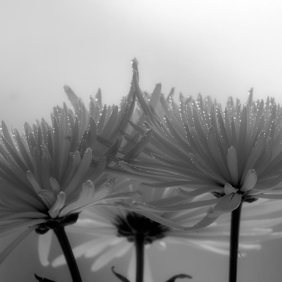 Flowers Photograph - Intimacy by Tom Druin
