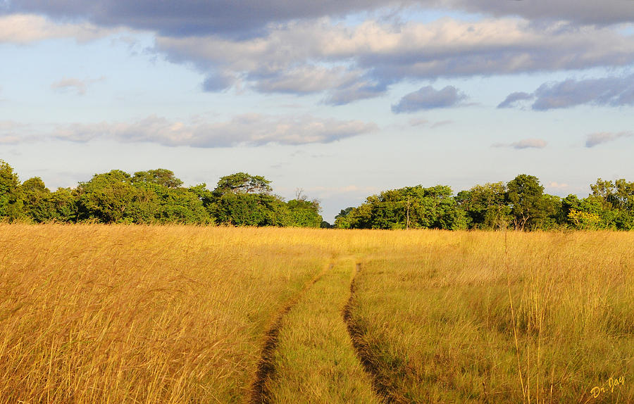 Africa Photograph - Into the Bush at Dawn by Jay Walshon MD