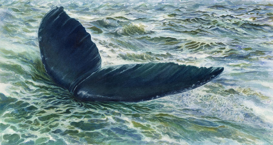 Humpback Whale Painting - Into The Deep by Connie Ely McClure