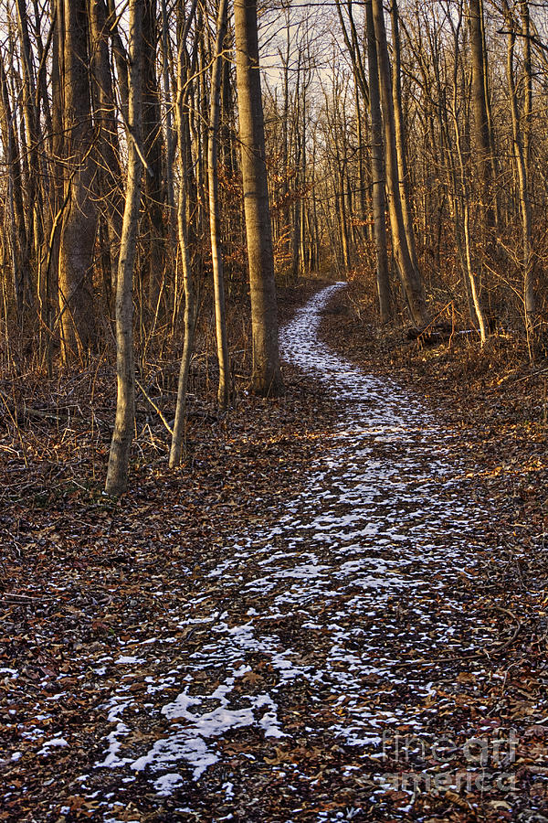 2010 Photograph - Into The Forest by Larry Braun