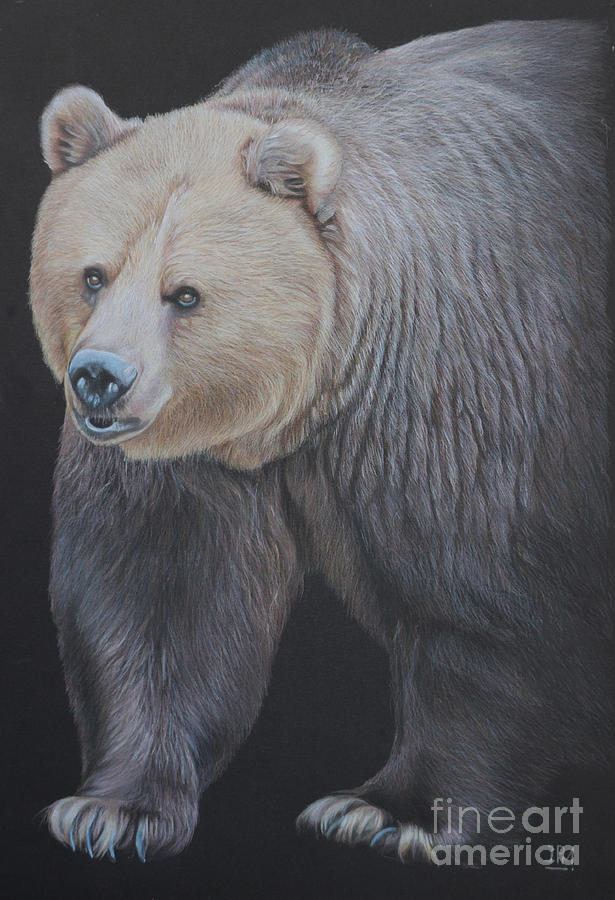 Animal Drawing - Into The Light by Jill Parry