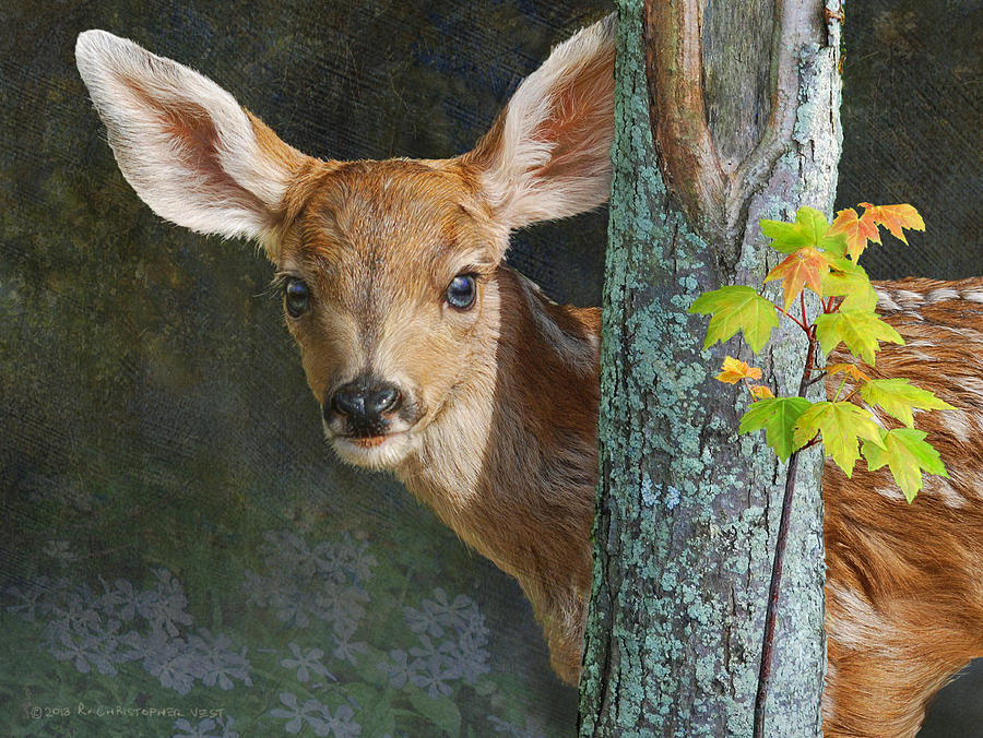 Into The Light Mule Deer Fawn Painting By R Christopher Vest