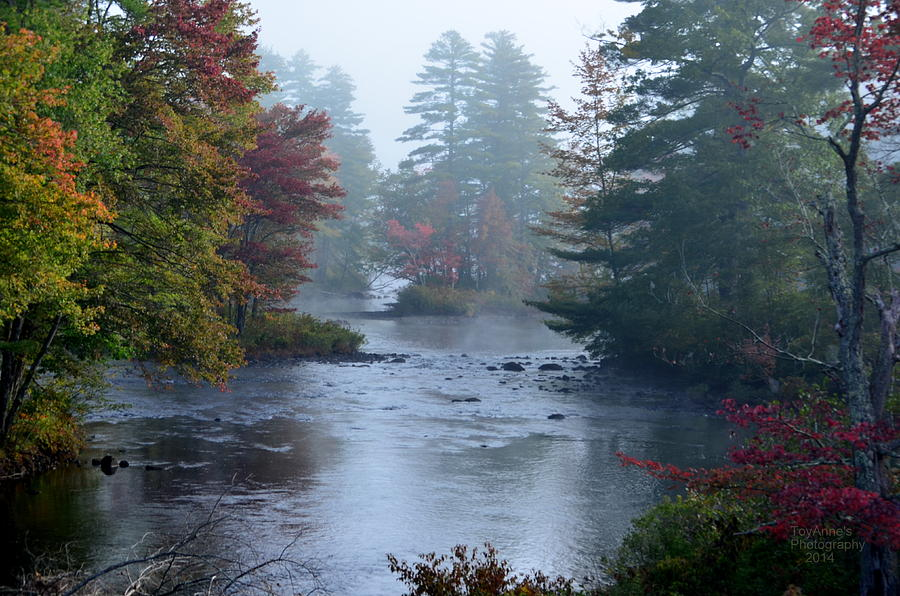 Landscape Photograph - Into The Mist by ToyAnne Gebo