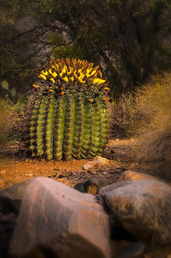 Into The Prickly Barrel Photograph
