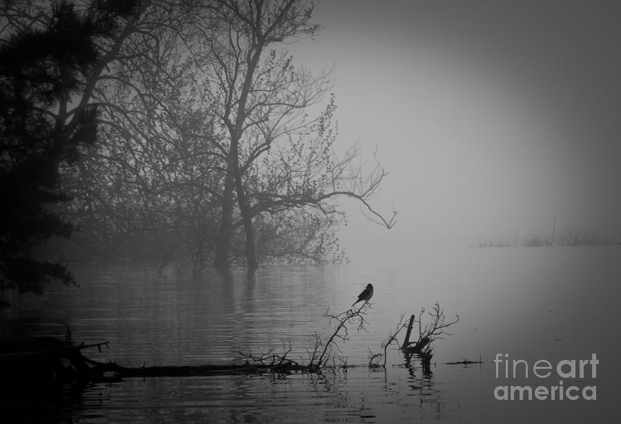 Fog Photograph - Into The Soup by Douglas Stucky