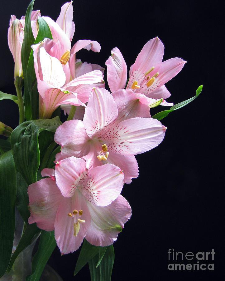 Wild Flowers Photograph - Invitation To Love by Cedric Hampton