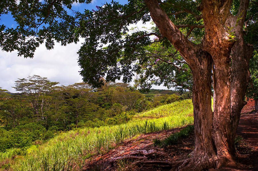 Mauritius Photograph - Invitation To Shadow Place. Chamarel. Mauritius by Jenny Rainbow