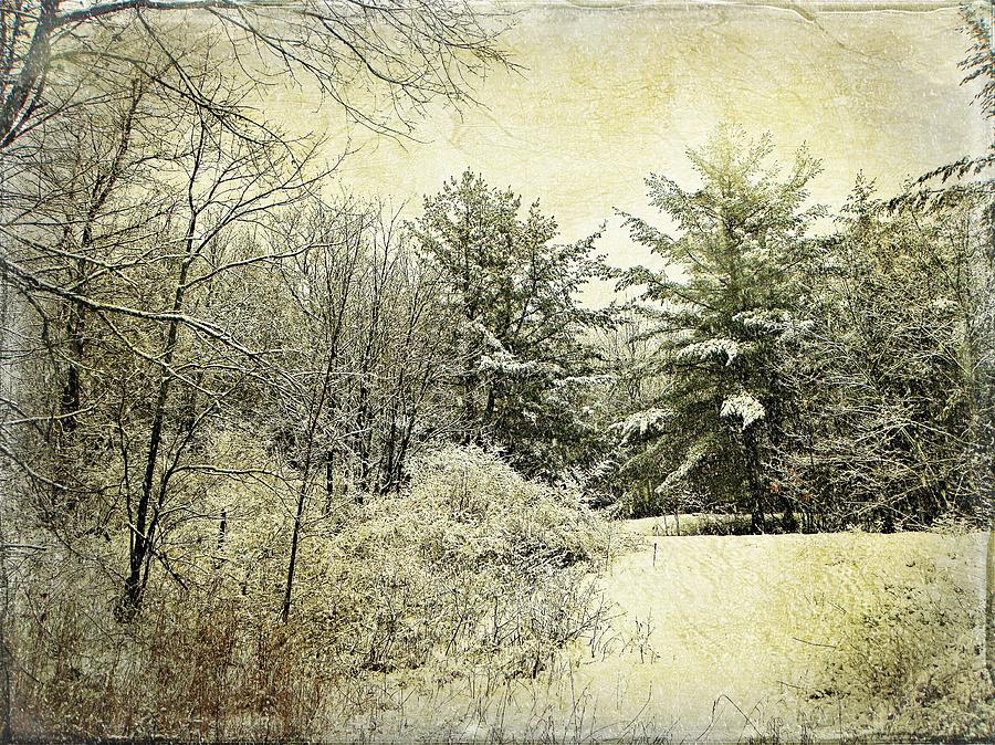 Winter Snow Nature Scenery Woodland Forest Northern Ontario Canada  Photograph - Invitation To Winter  by Dianne  Lacourciere