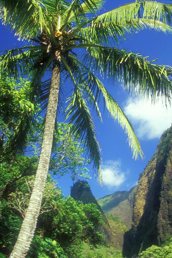 Hawaii Photograph - Io Valley Palm And Needle Maui Hawaii by John Burk