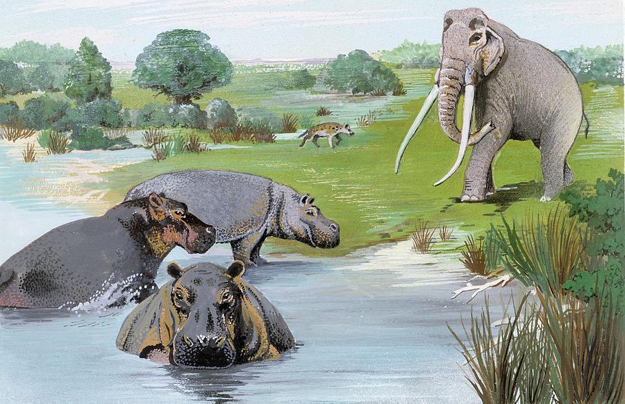 Animal Photograph - Ipswichian Interglacial Mammals by Natural History Museum, London/science Photo Library