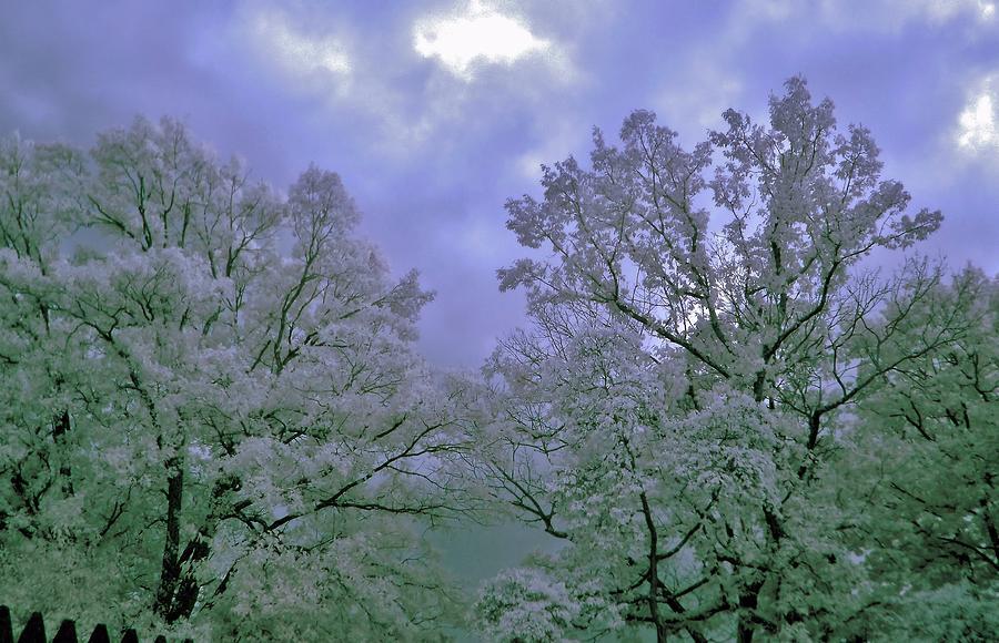 Ir Photograph - Ir Trees by Thomas  MacPherson Jr
