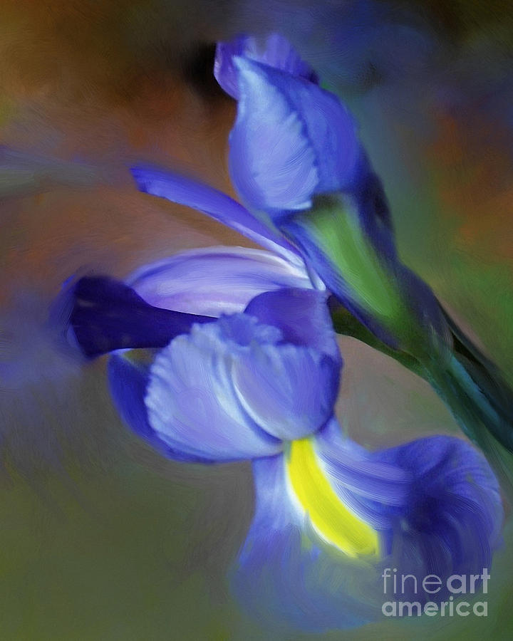 Iris Dream by Francine Dufour Jones