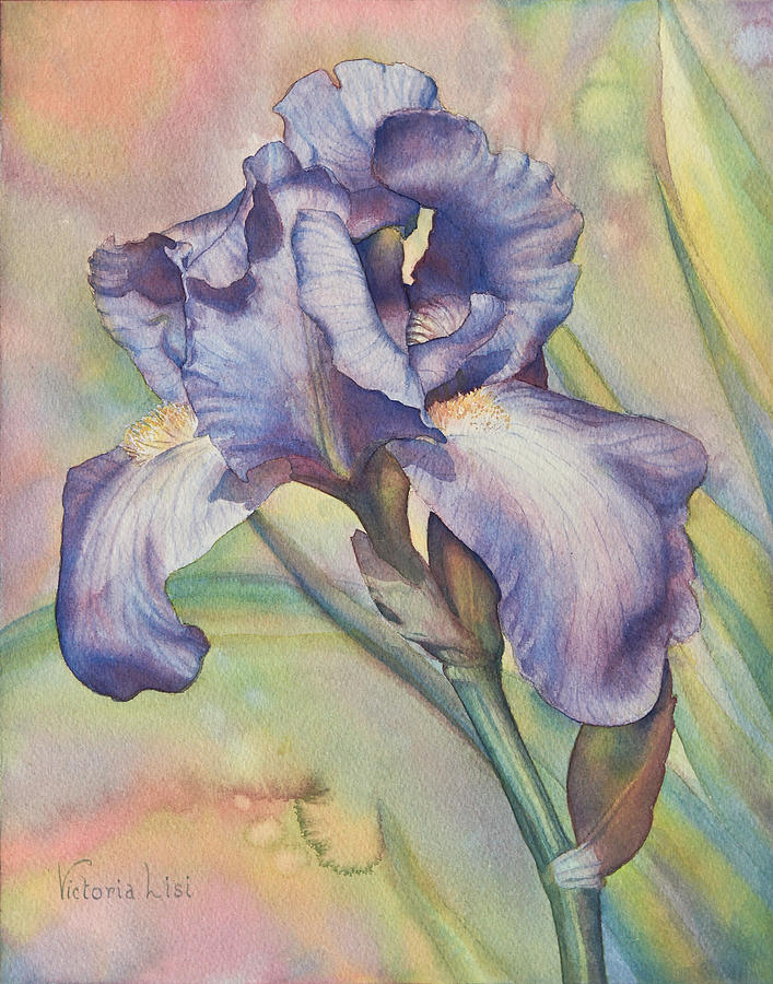 Iris Dreaming by Victoria Lisi