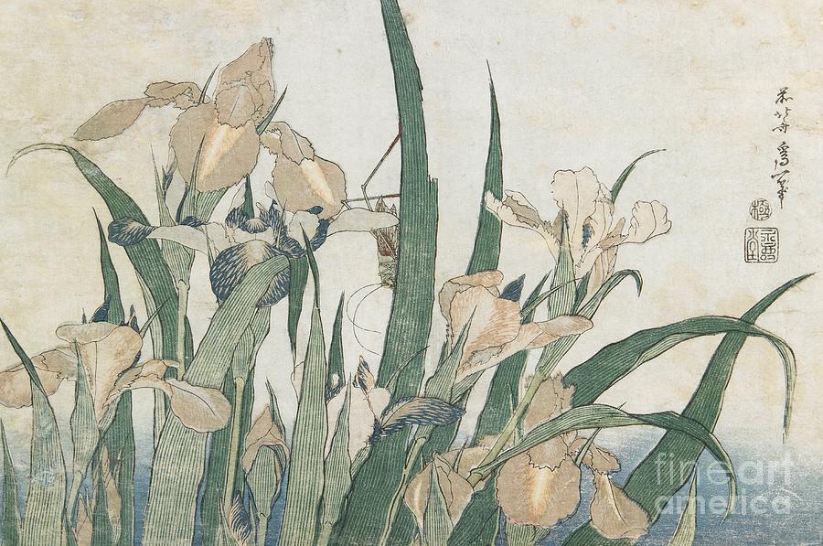 Japan Painting - Iris Flowers And Grasshopper by Hokusai