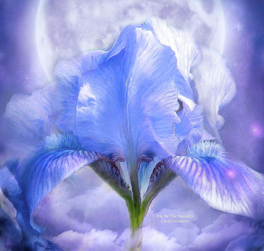 Iris - Goddess In The Moonlite by Carol Cavalaris