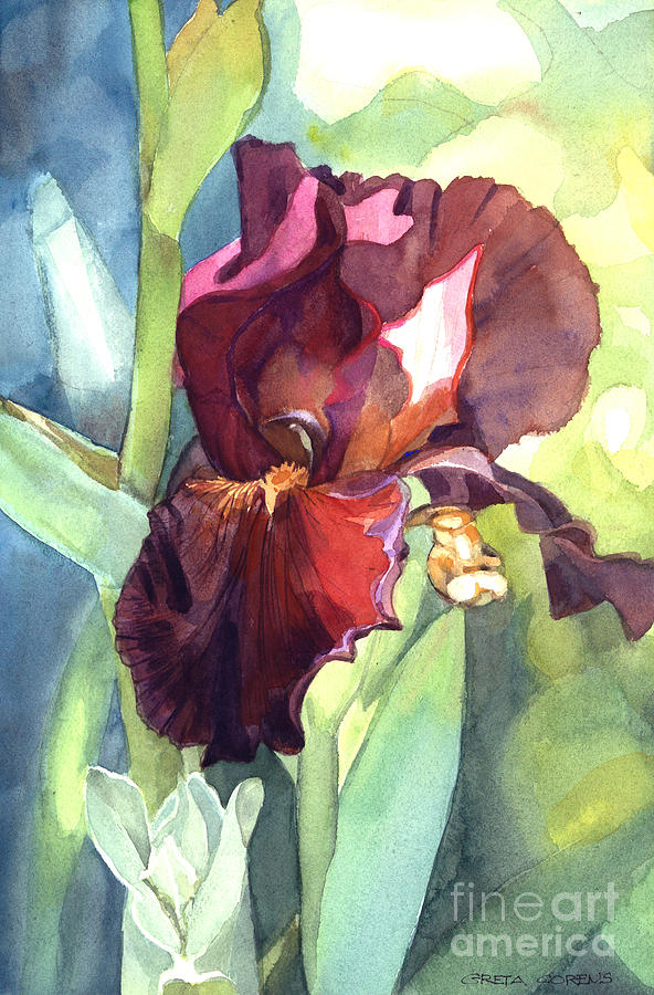 Watercolor of a Tall Bearded Iris called Sultan's Palace in Red and Burgundy by Greta Corens