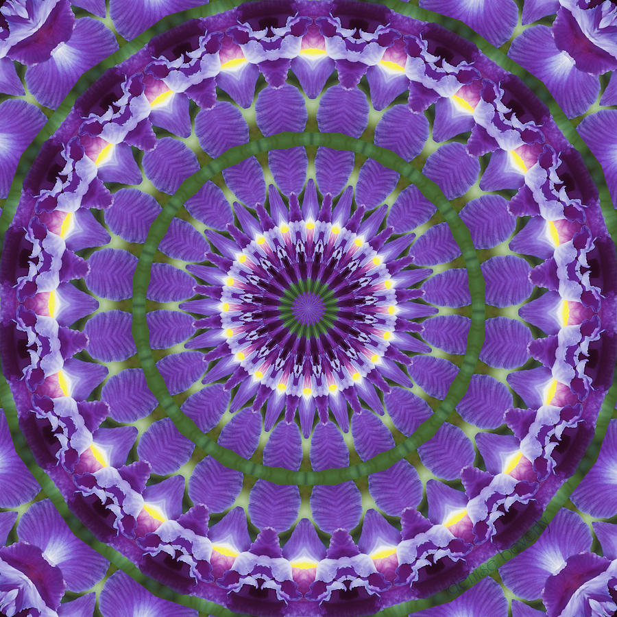 Iris Photograph - Iris Kaleidoscope  by Denise Beverly